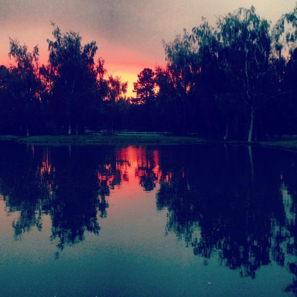 Reflective ponds at dusk.