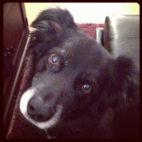 Cassi's best friend, Bella.  Cassi and I, and Bella and her mama, Shawn, all lived together in Bend, Oregon in 2003/04.