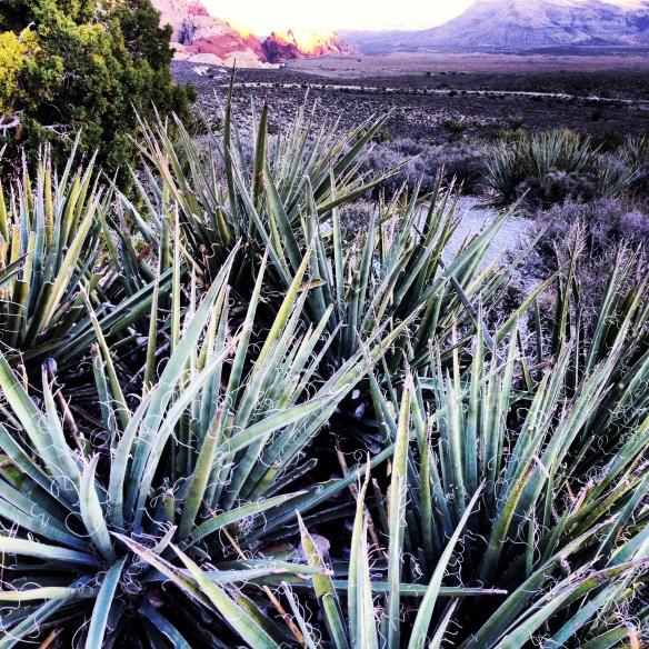 The breathtaking Nevada desert.